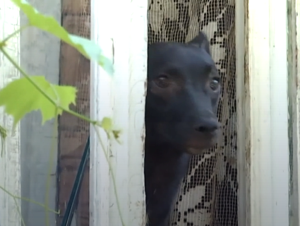 На Рівненщині зоозахисники виявили «концтабір» для котів і собак (відео)