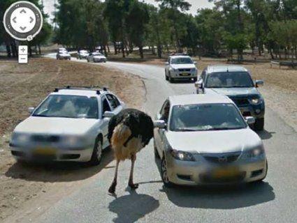 Топ-30 найкумедніших тварин, заскочених «всевидячим оком» Google View Street (фото)