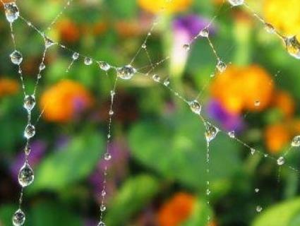Короткочасні дощі – прогноз погоди на вихідні