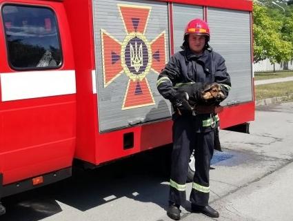 На Рівненщині рятувальники визволяли цуценят з каналізації (фото)