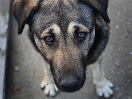 В Луцьку орудують живодери – потруїли собак на ЛПЗ і котів на «Варшавці»
