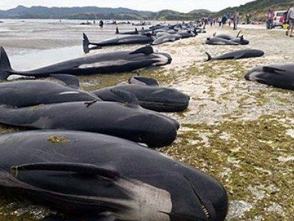 Відпочивальники врятували 18 дельфінів-самогубців (відео)