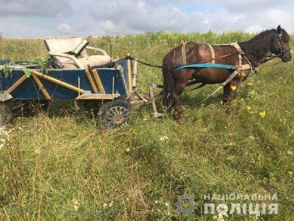 На Рівненщині комічний злочин: щоб вивезти крадене, «позичив» і коня