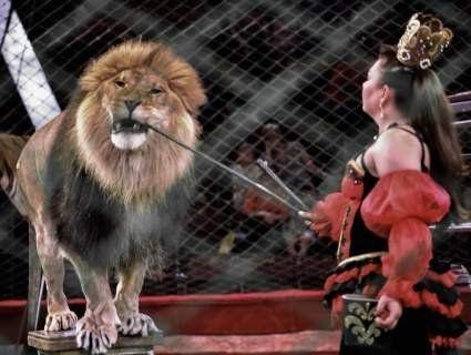 У Ковелі заборонили пересувні цирки з тваринами