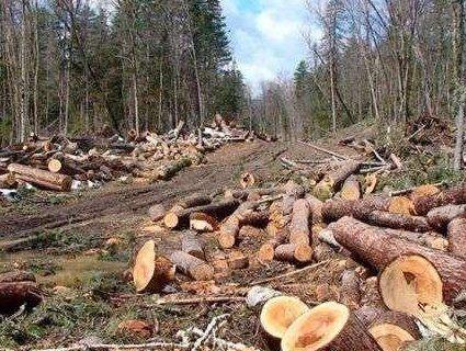 Після розмови із Зеленським лісівнику області повідомили про звільнення