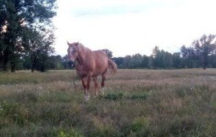 На Харківщині через коня загинула 14-літня дівчина