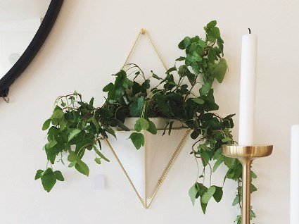 Модні кашпо і меблі для рослин