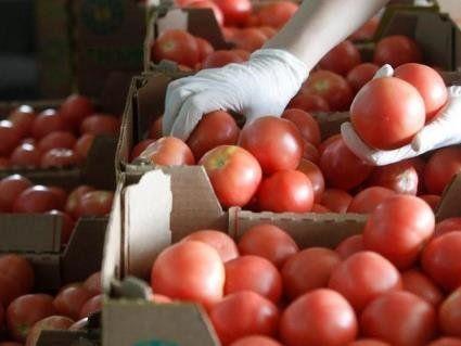 Через дощі та похолодання помідори не дешевшають