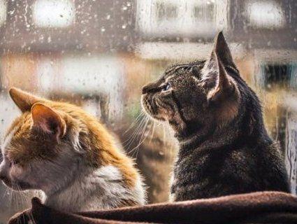 Дощі та похолодання: погода на Медового Спаса