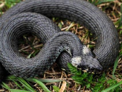 На Львівщині людей масово кусають змії