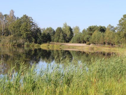 На відьминому озері чаклунка повелівала зміями