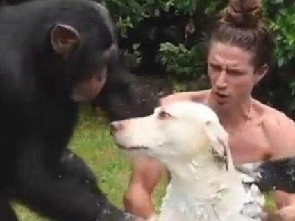 Дві мавпи вирішили помити пса і стали зірками інтернету (відео)