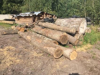 На Волині поліція вилучила 54 незаконно зрубаних колоди дубу