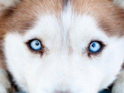 Держава не реагує на жорстоке поводження з тваринами — волонтерка