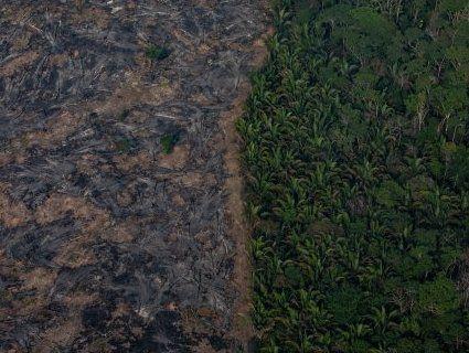 Жахаючі фото: як виглядають «легені планети» що горять