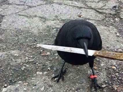 Окупували парк: у місті на Волині проти ворон-«терористок» застосують горілку