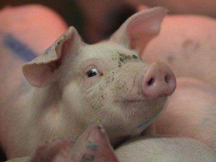 Вже чотири роки українці їдять заражене м'ясо