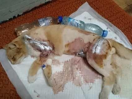 Живодерство: під Луцьком сім'я шкільної директриси відстрілює котів (фото)