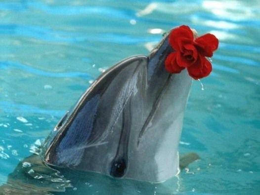 Дельфін незвично подякував рибалкам за врятованого малюка (відео)
