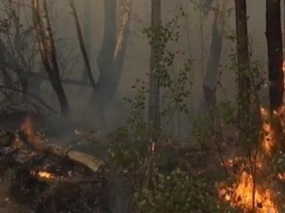 Страшну пожежу в Чорнобильській зоні спричинила жіноча помста (фото)