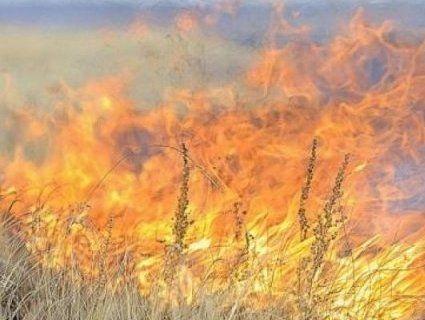 На Волині мало не згоріло 50 гектарів сої