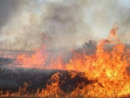 На Київщині згоріло 30 гектарів сої