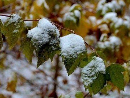 У найближчу п'ятницю в Карпатах прогнозують сніг