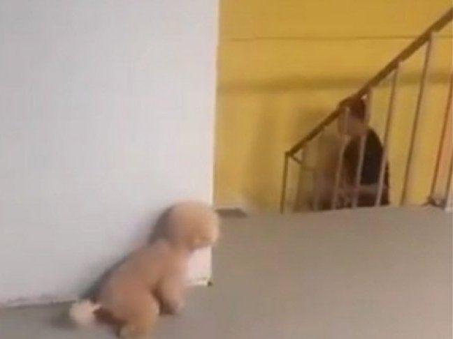 Мережу вразив розіграш від собаки-пранкера (відео)