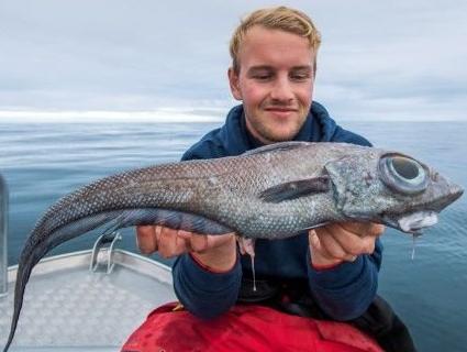 У Норвегії впіймали рибу-монстра