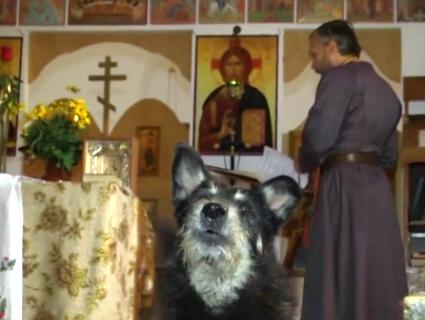 «Собача» церква в Рівному: священник тримає в храмі зграю псів і співає їм псалми (відео)