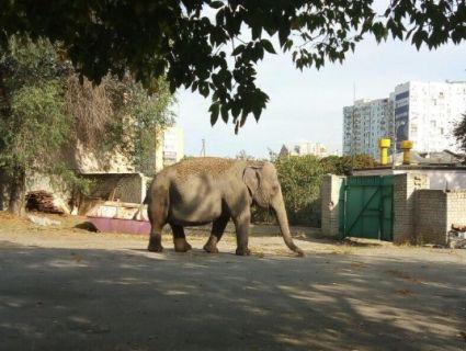 У Харкові біля дитячого садка розгулював слон (фото, відео)