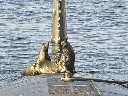 В Арктиці російський військовий човен потопила моржиха