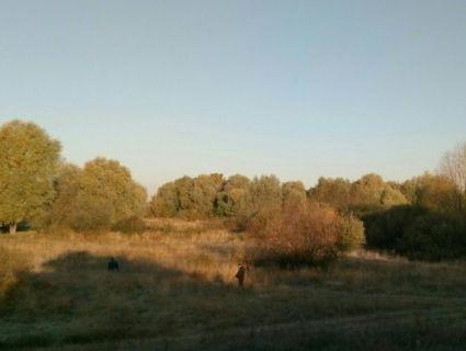 На Рівненщині собачник, вигулюючи пса, знайшов мертву жінку (фото 18+)
