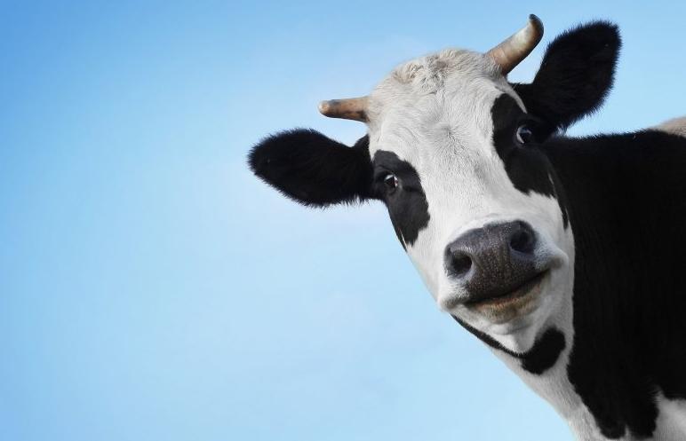 На Волині отруїли корів