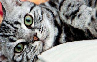 Кіт, який не вміє стрибати, став зіркою мережі (відео)