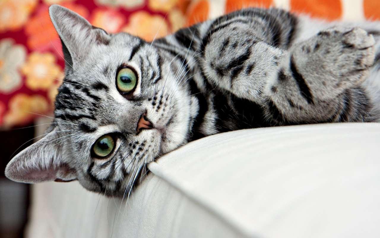 Спланована помста злопам'ятного кота стала хітом мережі (відео)