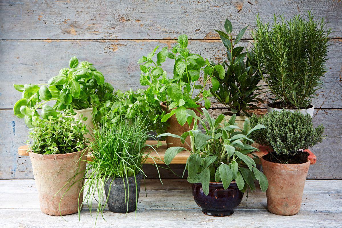 Несподівано: ці домашні квіти шкодять вашому здоров'ю