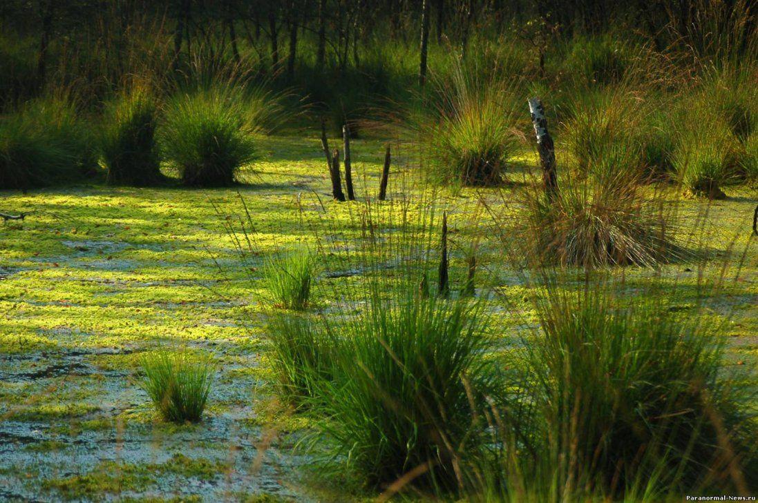 От Чортове болото: на Волині створять незвичний туристичний маршрут