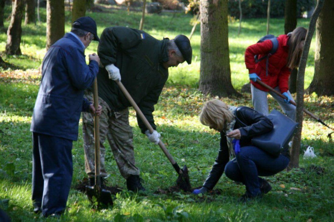 Шість тисяч цибулин: у луцькому парку висадили «кольоровий килим» (фото)