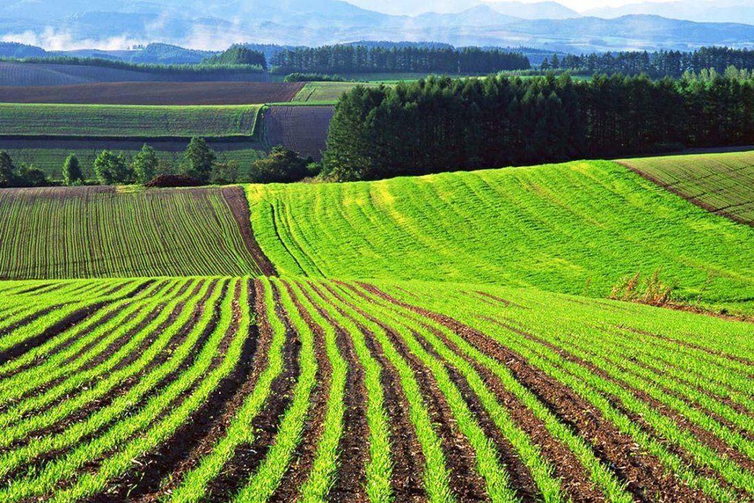 У Раді зареєстрували закон про ринок землі