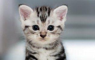Мережу порвало крякаюче кошеня (відео)