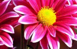 Конфлікт у Луцьку: «Був квітник, а стало…» (фото)