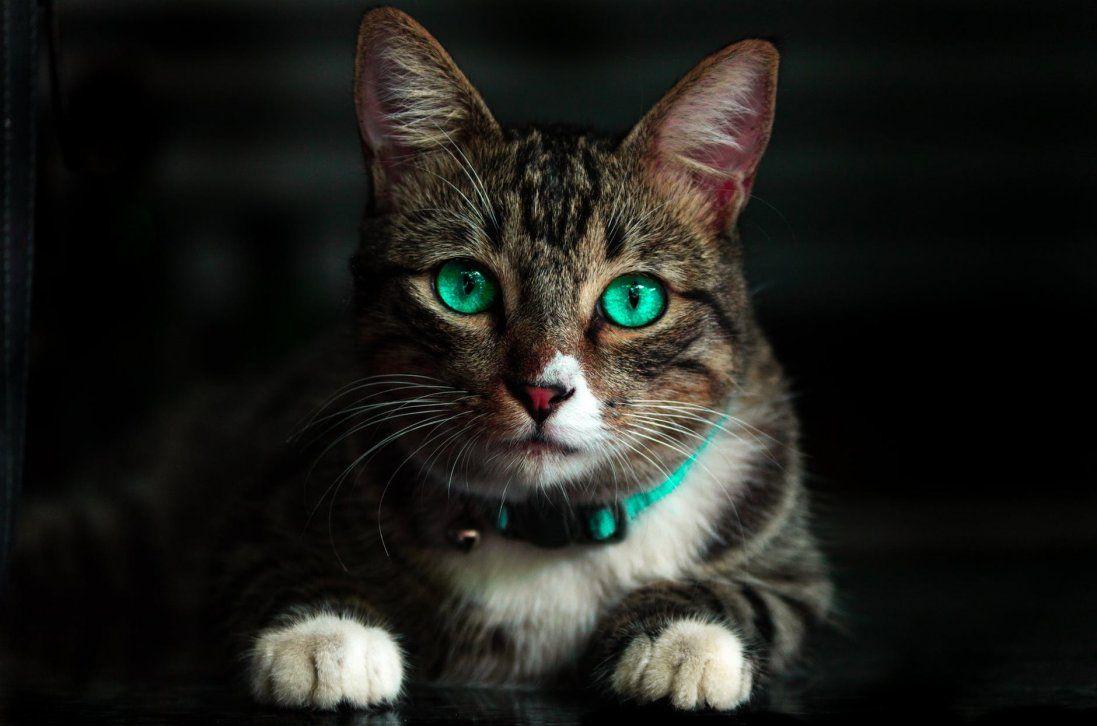 Маги та цілителі: прикмети про котів, які повинен знати кожен