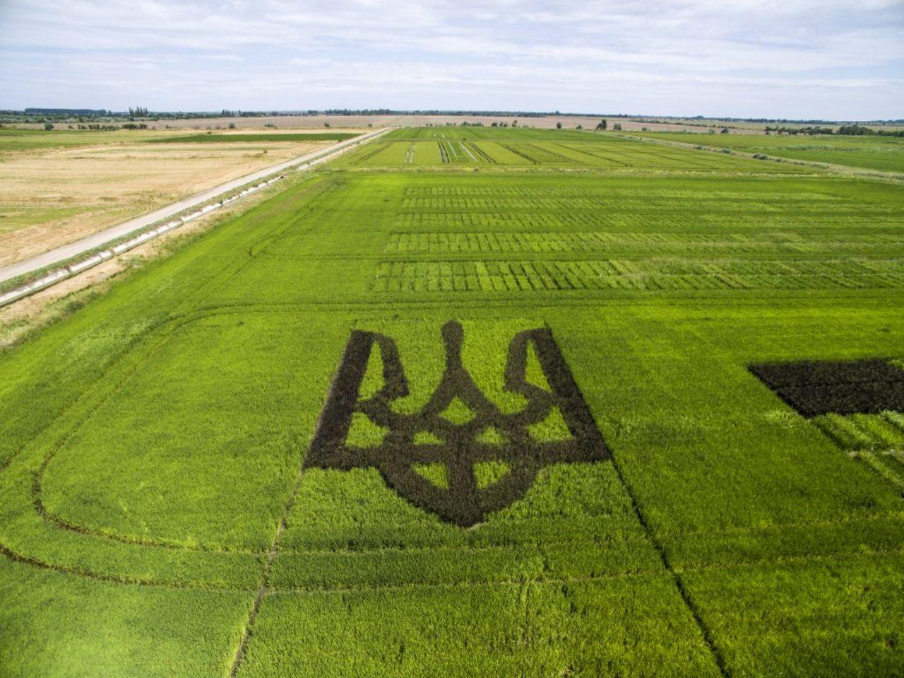 На кордоні Рівненщини з Білоруссю піднісся 4-метровий Тризуб (фото)