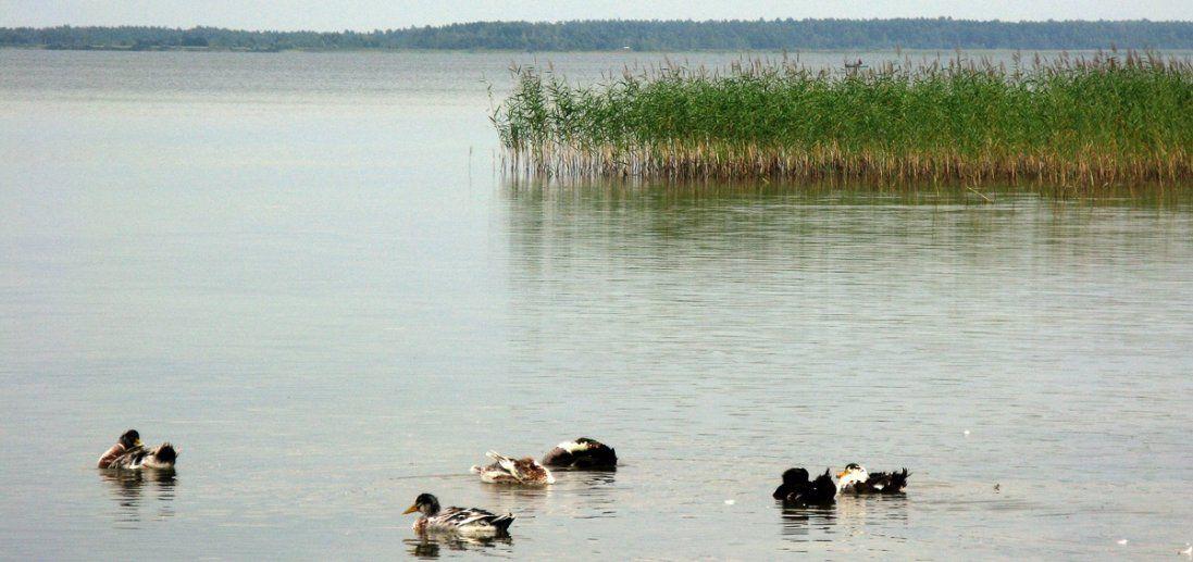 Не тільки Світязь: на Волині міліють озера
