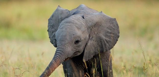 Відео зі слонячим квачем стало хітом мережі