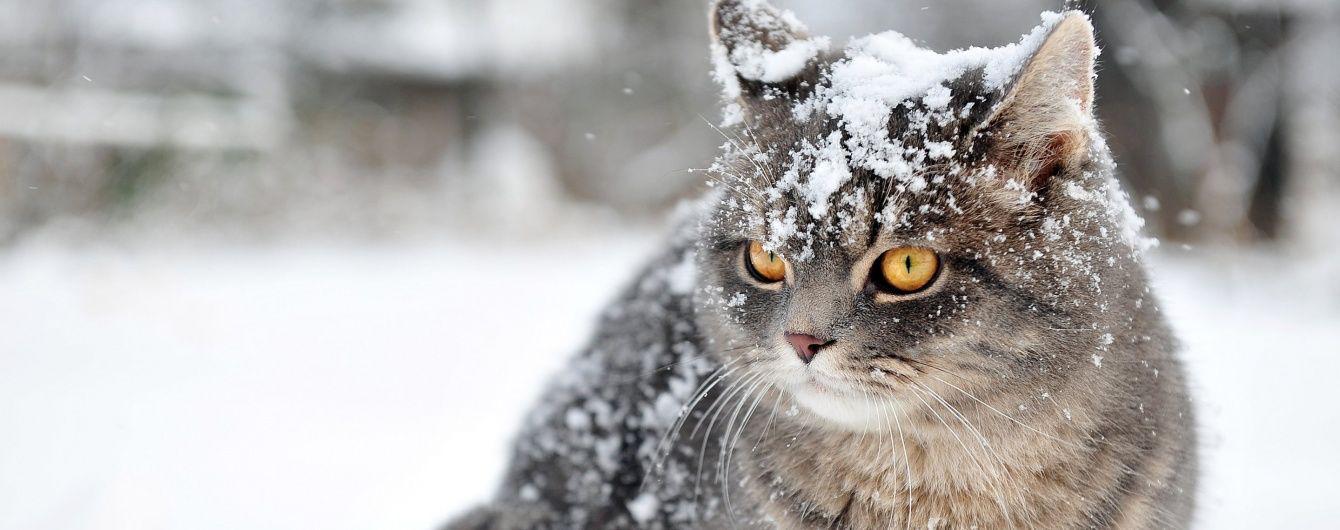 Дощитиме і сніжитиме: повідомили, якою буде погода в листопаді