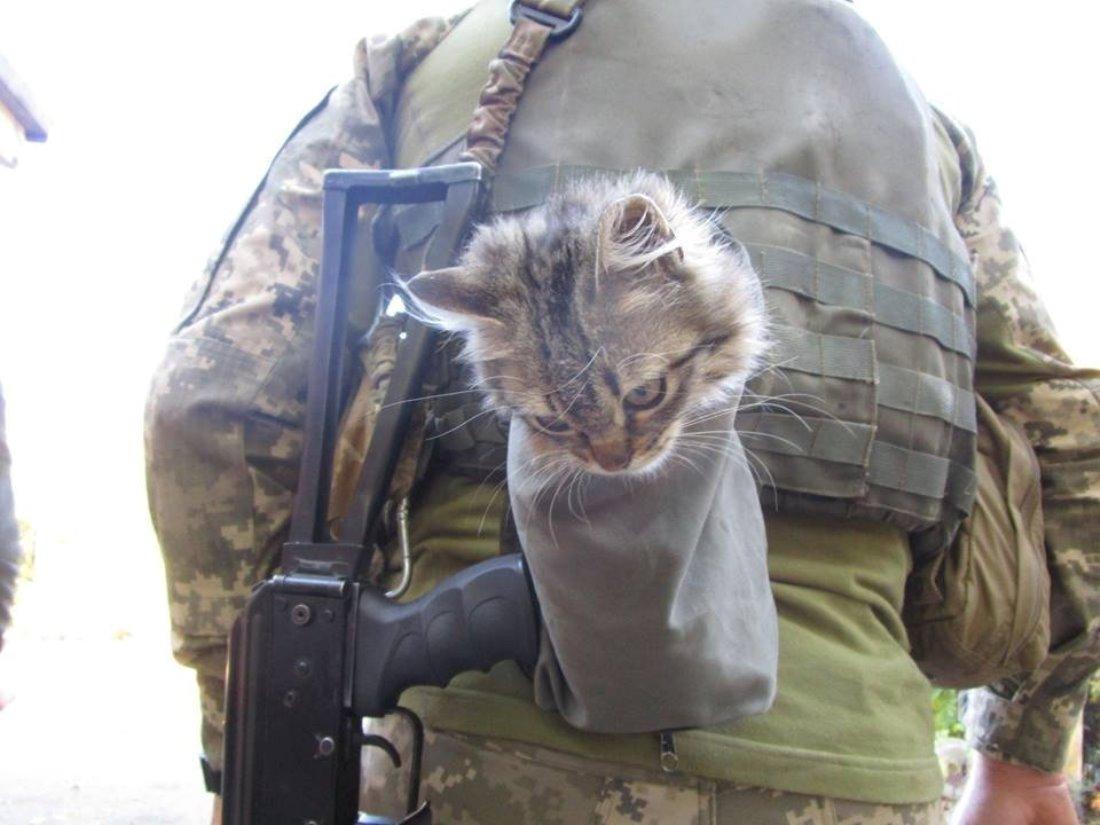 Життя на «передку»: контужений кіт Ігор став вірним другом бійцям ЗСУ (фото)