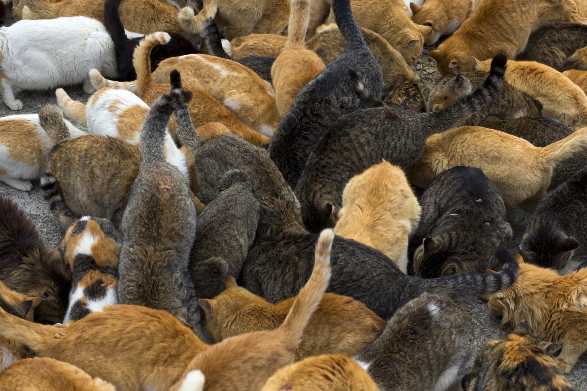 Мертва львів'янка чотири доби пролежала у квартирі з 50 котами (фото)