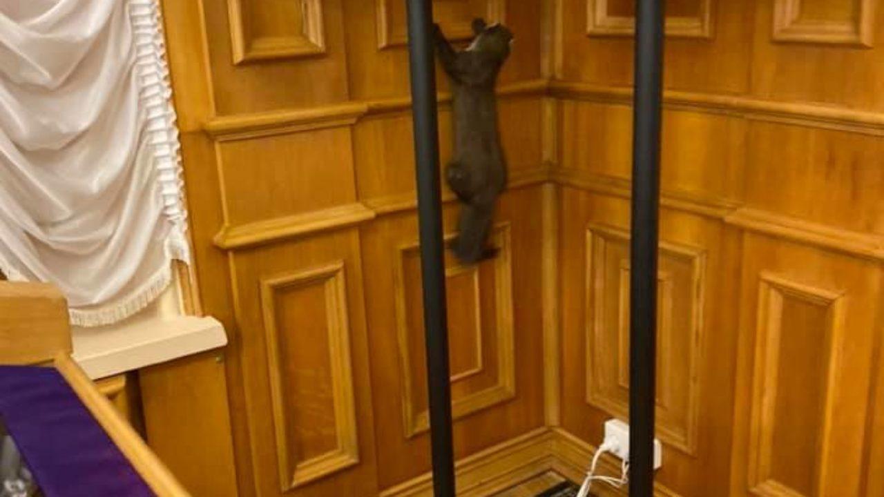 «Зайшла без посвідчення»: дика куниця забігла в кулуари Ради (відео, фото)